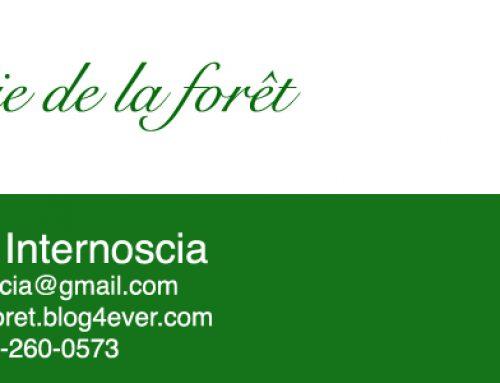 Bénéficier pleinement d'un soin énergétique en forêt